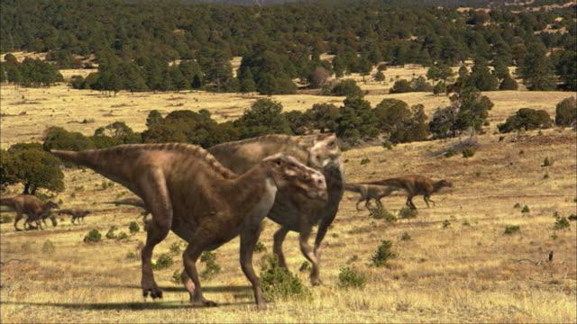 cgi, ms, group of  dinosaurs walking in field - dinosaur stock videos & royalty-free footage