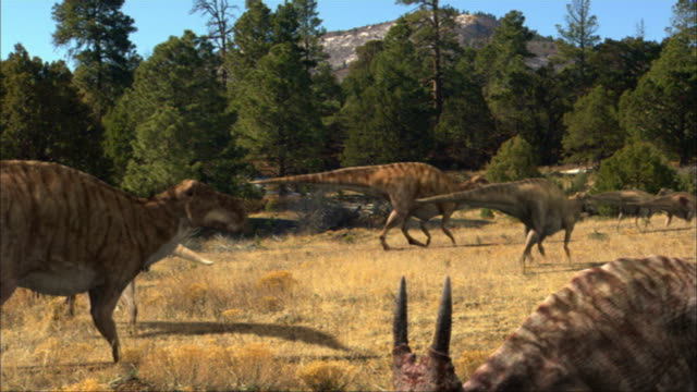 CGI, MS, Group of dinosaurs walking in field