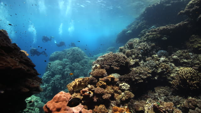 A group of divers exploring a hard coral reef garden in the Red Sea