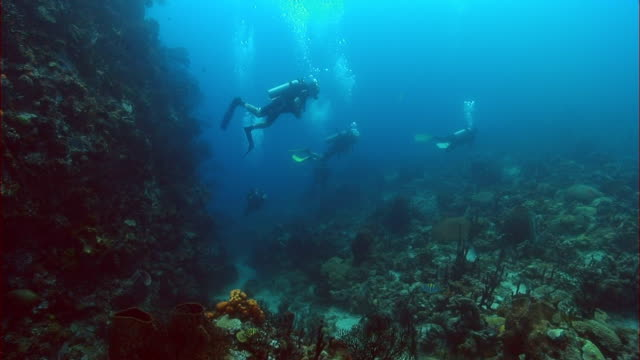 WS, Group of divers moving around coral reef, Saint Lucia