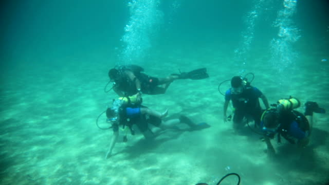 A group of divers underwater taking a scuba diving course