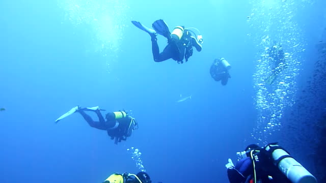 hd: group of divers - scuba diving stock videos & royalty-free footage