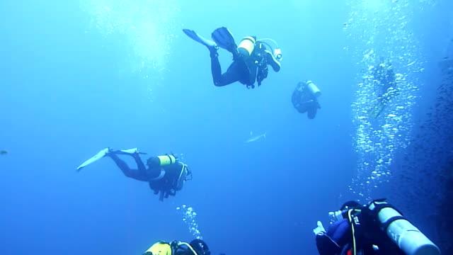 stockvideo's en b-roll-footage met hd: group of divers - scubaduiken