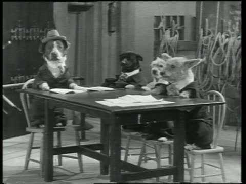 b/w 1930 group of dogs in clothes sitting at table in theater / dogway melody - animale da spettacolo video stock e b–roll
