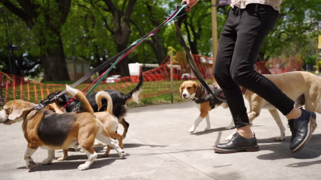 group of dogs on a walk - group of animals stock videos & royalty-free footage