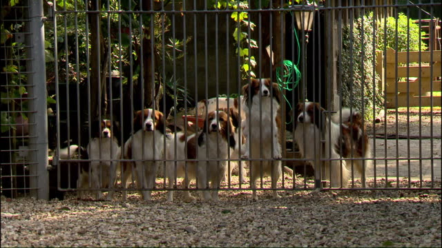 a group of dogs stand at a gate and wag their tails. - tail stock videos & royalty-free footage