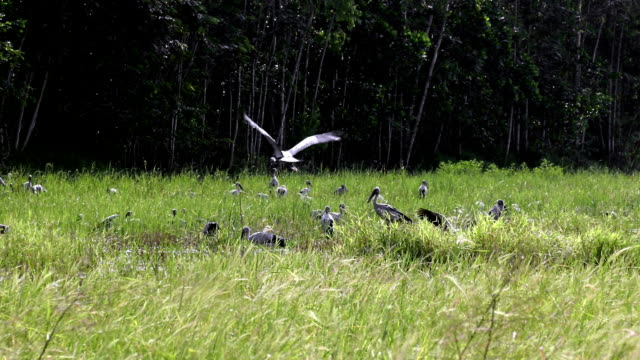 Group of egrets at the countryside