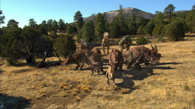 a group of einosauruses block the path of three tyrannosaurus rex. - dinosaur stock videos & royalty-free footage