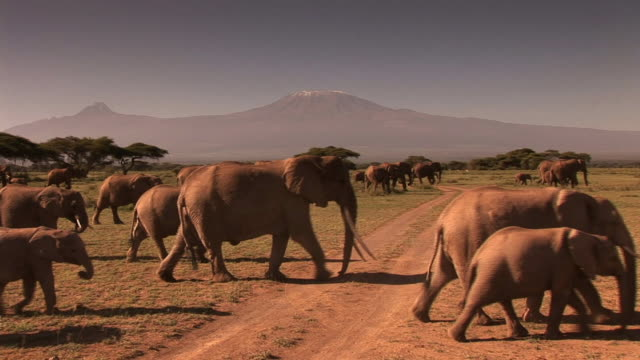 group of elephants - africa stock videos & royalty-free footage
