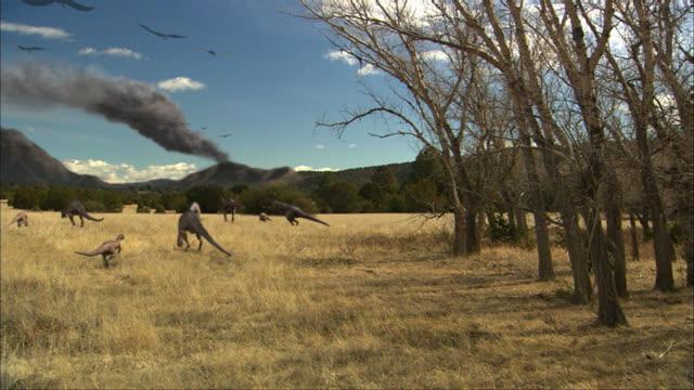 vídeos de stock, filmes e b-roll de cgi, ws, group of eoraptors grazing in field - jurássico