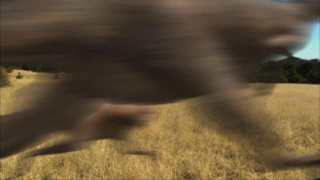 cgi, ms, group of eoraptors running in field - eoraptor stock videos and b-roll footage