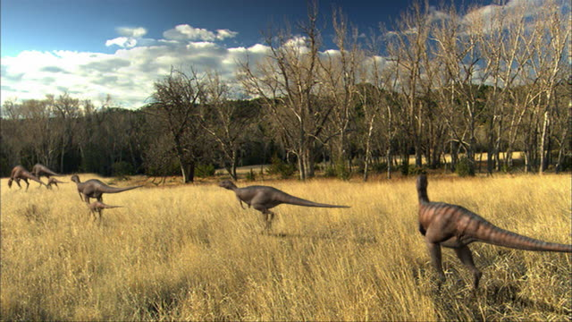 cgi, ws, pan, group of eoraptors walking in field, rear view - paleozoology stock videos and b-roll footage