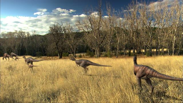 vídeos de stock, filmes e b-roll de cgi, ws, pan, group of eoraptors walking in field, rear view - jurássico
