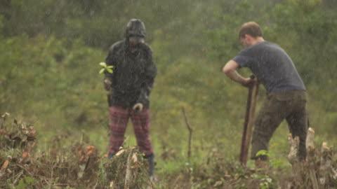 gruppe von freiwilligen pflanzt bäume im regen in brasilien - baum stock-videos und b-roll-filmmaterial
