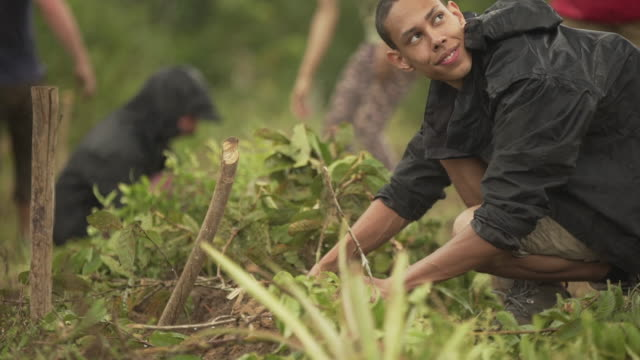 a group of farm workers planting trees in brazil - plant stock videos & royalty-free footage