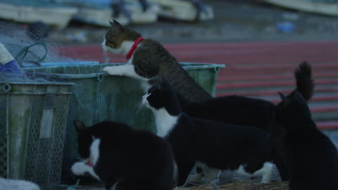 vídeos y material grabado en eventos de stock de group of feral domestic cats climb on fish boxes then jump as fish is thrown to them - grupo mediano de animales
