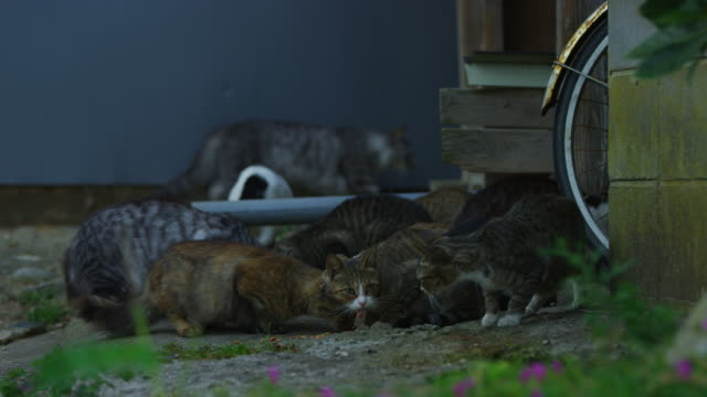 group of feral domestic cats eating together by house - 迷子の動物点の映像素材/bロール