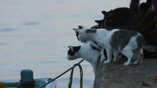group of feral domestic cats on edge of dockside intently watching fisherman working on boat - 辺縁部点の映像素材/bロール