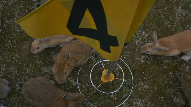 ha group of feral domestic rabbits at base of golf flag - golf flag stock videos & royalty-free footage
