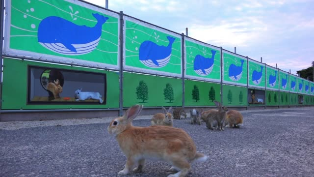 SLOMO group of feral domestic rabbits on roadway with painted graphics in background as rabbit hops into foreground