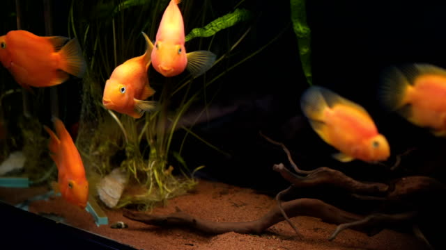group of fish in tank