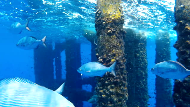 group of fish swimming underneath a oil and gas wellhead platform show casing and platform structure with marine growth and rust. - aqualung diving equipment stock videos & royalty-free footage