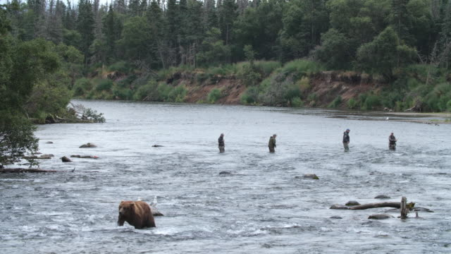 group of fishermen wading in distance in alaska - walking in water stock videos & royalty-free footage
