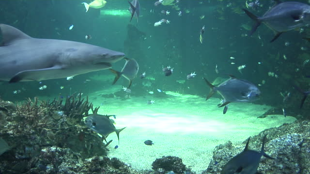 ms, group of fishes in sydney aquarium, australia - 水族館点の映像素材/bロール