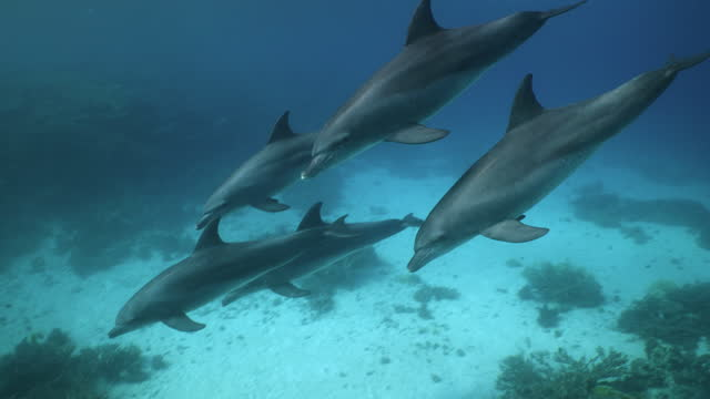 group of five dolphins swimming down from ocean surface - バンドウイルカ点の映像素材/bロール