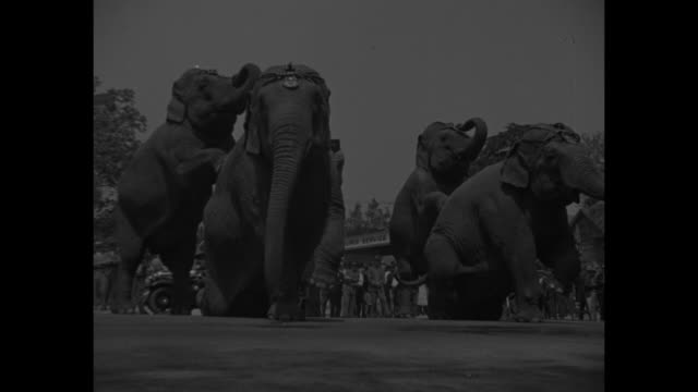 vídeos de stock e filmes b-roll de group of five elephants performs on pavement for kids in wheelchairs and on gurneys / clowns hand out balloons to kids / four elephants perform / vs... - circo