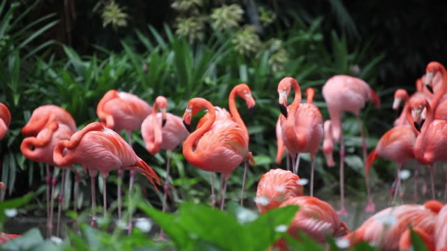 a group of flamingoes in the forest, singapore - 動物園点の映像素材/bロール