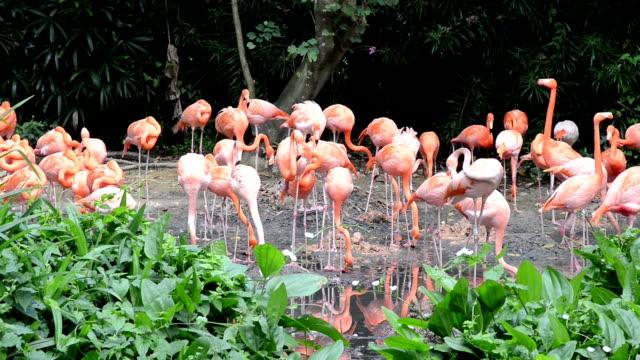 vídeos de stock, filmes e b-roll de grupo de flamingos na floresta - boca animal