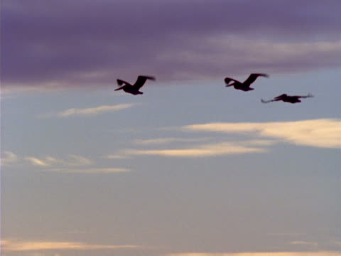 a group of flying pelicans passes by. - artbeats 個影片檔及 b 捲影像