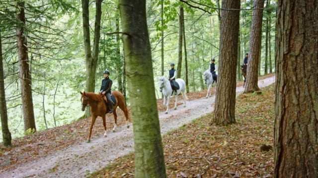 ts group of four riders riding horses on forest road - group of animals stock videos & royalty-free footage