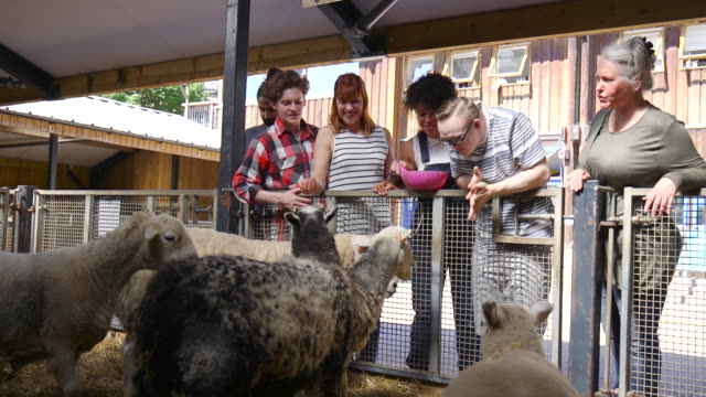 group of friends feeding sheep - charitable donation stock videos & royalty-free footage