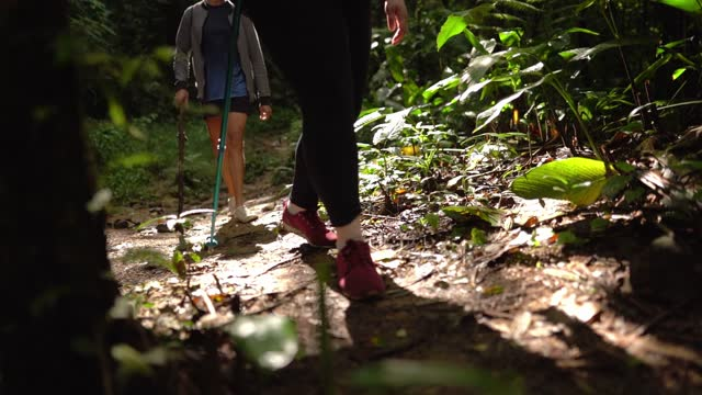 group of friends hiking in a forest - tropical tree stock videos & royalty-free footage