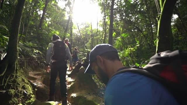 vídeos de stock, filmes e b-roll de grupo de amigos caminhando em uma floresta - trilha passagem de pedestres