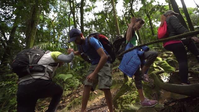vídeos de stock, filmes e b-roll de grupo de amigos caminhando em uma floresta - ecoturismo