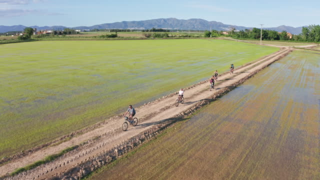 vídeos de stock e filmes b-roll de group of friends riding bikes through rice paddy fields - environmental issues