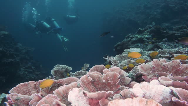 group of friends scuba diving staycation near healthy maze coral reef thailand - andaman sea stock videos & royalty-free footage