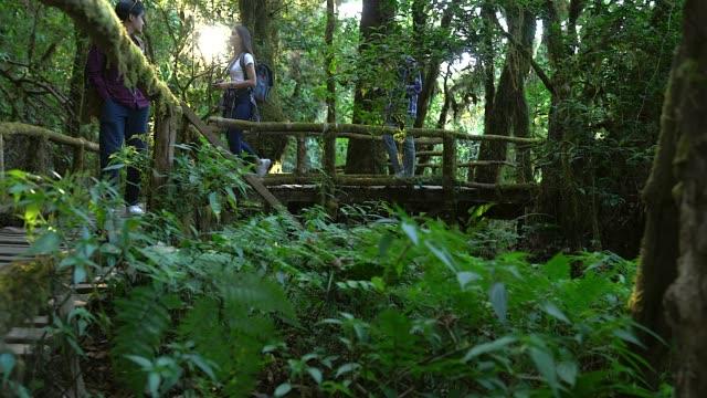 Gruppe von Freunden, Wandern im Herbstwald, von der Schönheit der Natur erstaunt, mit bequemen Outfits für Wanderungen durch die Dschungelpfade