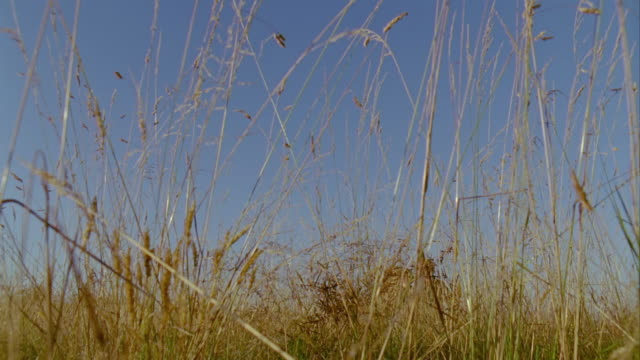 cu, la, group of friends walking through grass in meadow, saint ferme, gironde, france - tre quarti video stock e b–roll