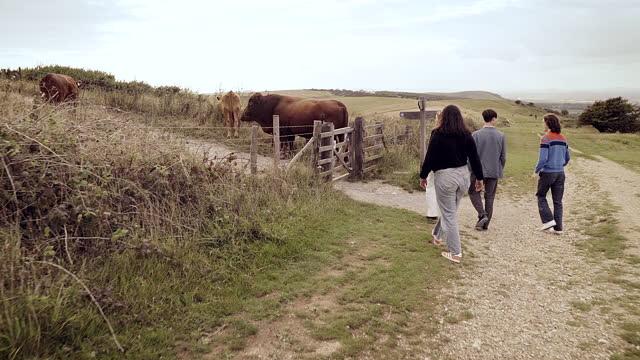 group of friends walking towards some cows in the countryside - east sussex stock videos & royalty-free footage