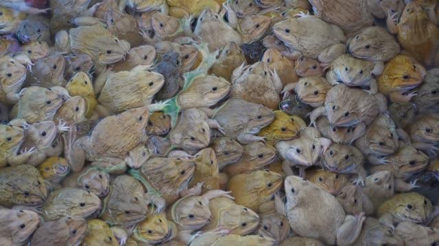 gruppe der frösche - large group of animals stock-videos und b-roll-filmmaterial