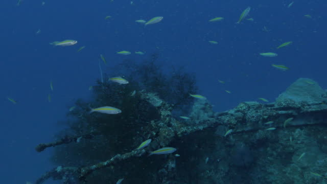 group of fusilier fish swimming at deep sea wreck - fish stock videos & royalty-free footage