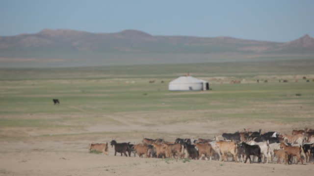 group of goats and sheep passing by - independent mongolia stock videos & royalty-free footage