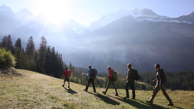 Group of hikers ascend through mountain meadow