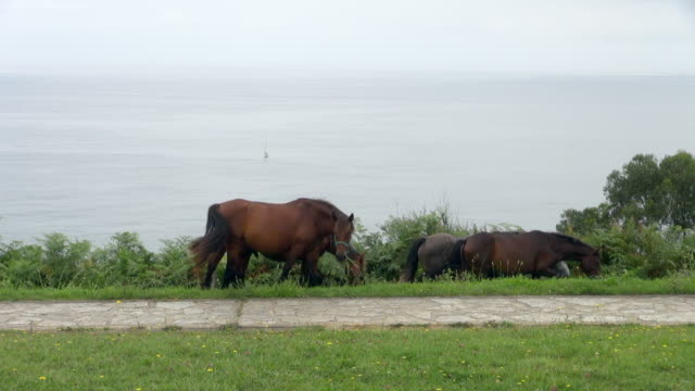 group of horses grazing and walking together - 雄馬点の映像素材/bロール