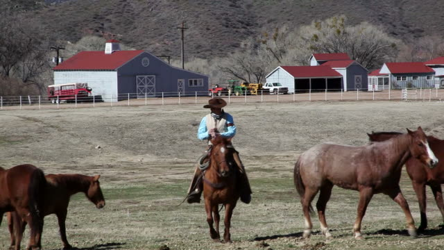 WS Group of horses in field in front barn and stable cowboy riding through on horse / Kirkland, Arizona, USA