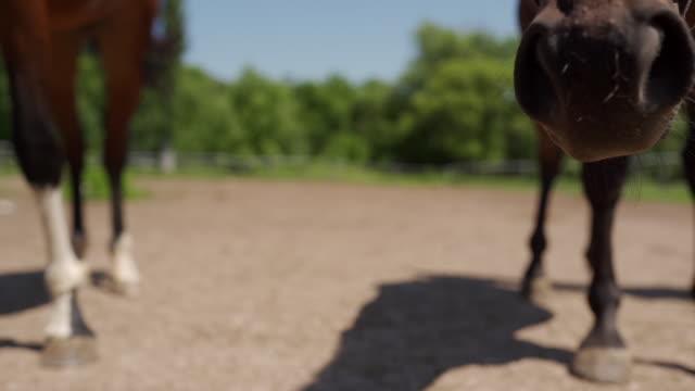 gruppe von pferden im fahrerlager - zaum stock-videos und b-roll-filmmaterial